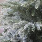 Rathwood premium frosted 8ft tree