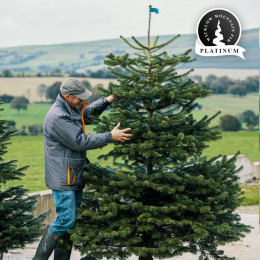 Real 8ft wicklow mountain fir