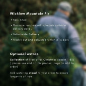 Real 9 9 5ft wicklow mountain fir