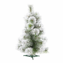 60cm amsterdam pine tree